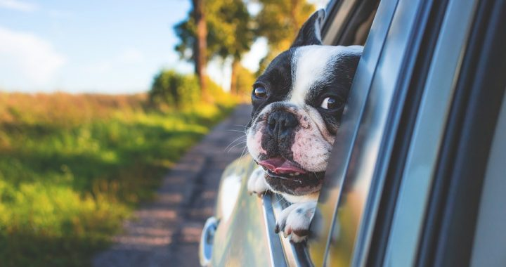 a dog traveling by car - something you can see when people move with pets