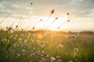 A sunset in a field
